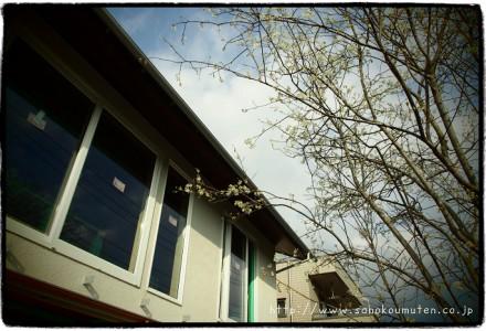 シンボルツリー植樹(ジューンベリー)-八千代緑が丘の家