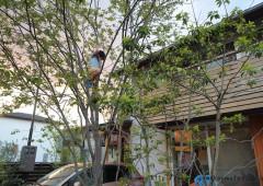 樹木のある暮らし