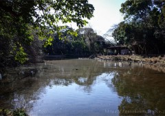 森林公園 180114