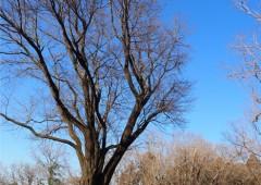 米沢の森 180218